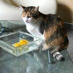 die Hauskatze Mietzi hatte gerade in der Lobby etwas Wasser getrunken