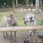 Lindenthaler Tierpark