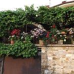 Pelargonie i winorośl przy wejściu