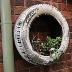 Plants in a tire