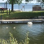 Swan & Babies at the Harbourview Cafe