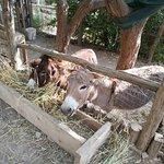 Azienda Agrituristica Fossa Papa照片