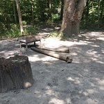 Starved Rock campground is beautiful and the trails (in pic) accessible from our camper, and mos