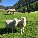 Two happy sibilings enjoy the summer at Øvre-Eide Farm.