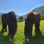 Rosa and Rinja, our two Dole horses.