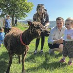 Open Farm Day is a popular activity for kids and parents alike.