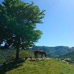 Beautiful Jordal in the summer.