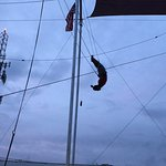 Miami Flying Trapeze - Planche