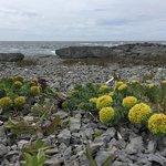 Limestone flowers