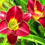 Floyd Flower's!