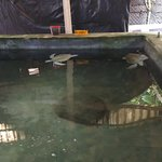 صورة فوتوغرافية لـ Sea Turtle Protection Association
