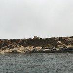 Foto de Favignana in Barca Con Salvo