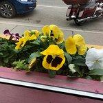 Beautiful flowers on the windowsill!