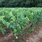 Ici il y a un chemin de randonnée avec les vignes (au lavoir)
