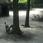 Photo of Cape May County Park & Zoo