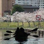 桜とカヤック(Cherry&kayak)