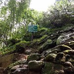 Jingmaham Living Root Bridge