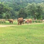 Foto de Elephant Nature Park
