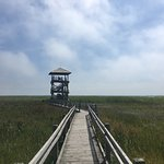 Liepaja lake watchtower照片