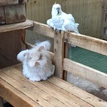 Rabbit and cockatoo at their farm