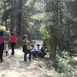 Trekking at a nearby forest near Kosi Valley Retreat