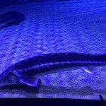 Antalya Aquarium照片