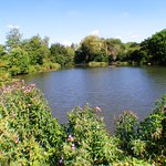 Fishing Ponds.