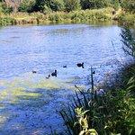 Wildlife on the ponds.