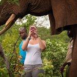 Wild Horizons Elephant Encounter - walk with Giants