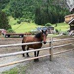 Photo de La Ferme des 3 Ours