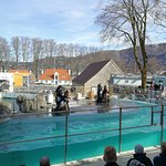 Bergen Aquarium Foto