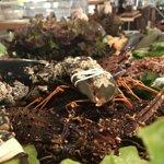 astice vs aragosta locali!!!
