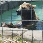 Turpentine Creek Wildlife Refuge resmi
