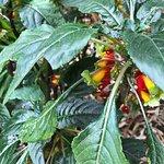 Unusual plants
