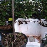 Interesting displays of chrysalis's and caterpillars.