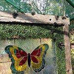 Butterflies everywhere you look.