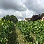 Rustic Vines