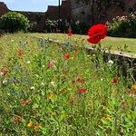 Photo de Connaught Gardens