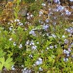 Flowers at the arboretum!