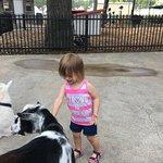 Pretty Goat (and very tolerant of children).