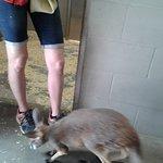 Bébé kangourou de la pouponnière