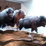 Head-Smashed-In Buffalo Jump World Heritage Site – fénykép