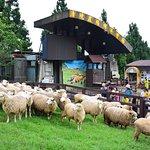 Photo of Cingjing Veterans Farm