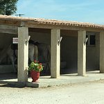 Camargue Alpilles Safaris照片