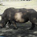 Mogo Zoo