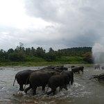 @Pinnawala Elephant Orphanage Srilanka.