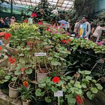 Flower Exhibition Center - Sikkim , Lot of variety of flowers