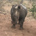 Some views from the 2 tented camp experience, bushwalking with an experienced guide