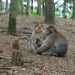 La montagne des singes照片
