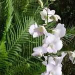 Few pics around Botanical Garden